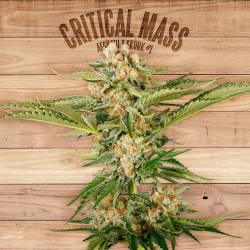 CRITICAL MASS - Imagen 1