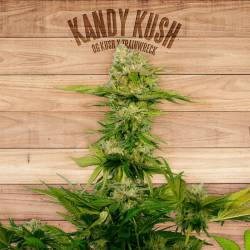 KANDY KUSH - Imagen 1