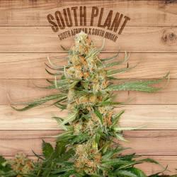 SOUTH PLANT - Imagen 1