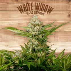 WHITE WIDOW - Imagen 1