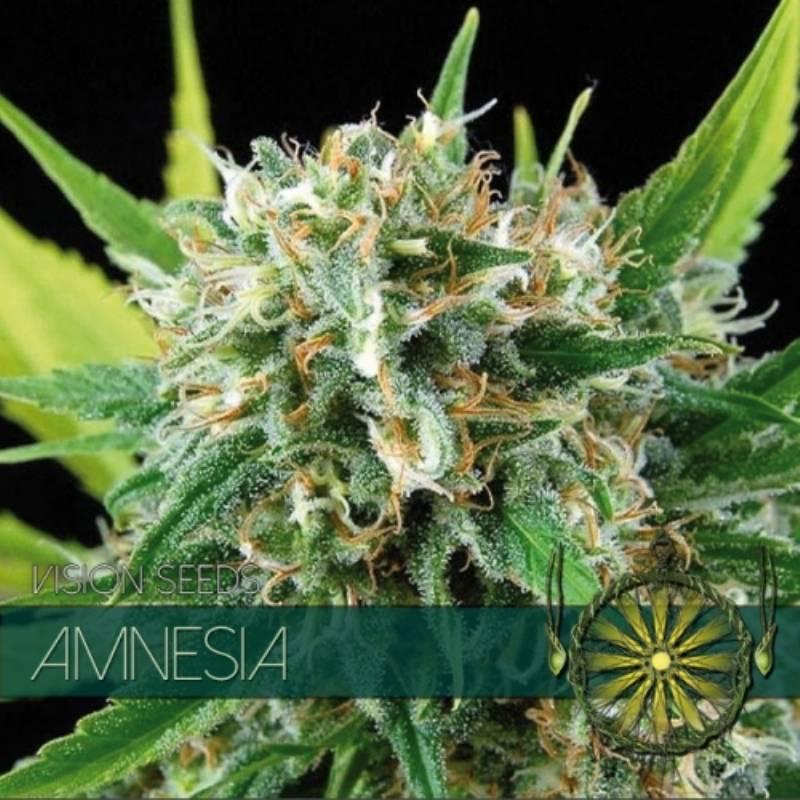 AMNESIA Feminizada (ETIQUETA FRANCESA) - Imagen 1