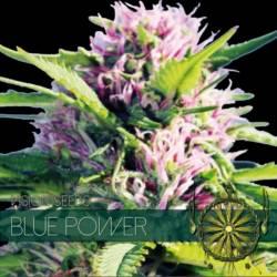 BLUE POWER Feminizada (ETIQUETA FRANCESA) - Imagen 1