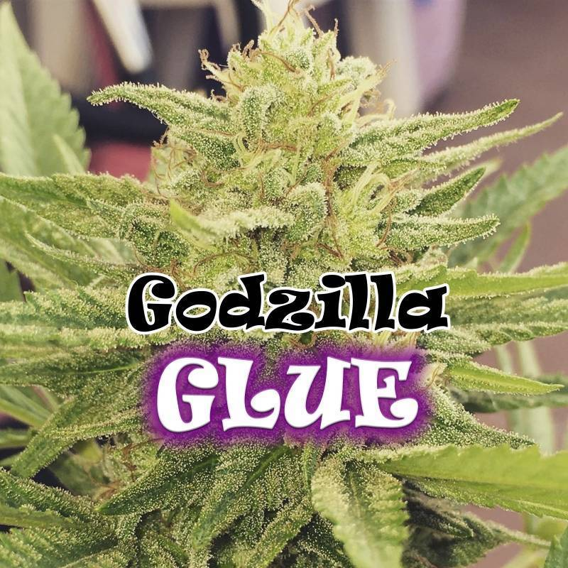 Godzilla Glue Feminizada de Dr Underground