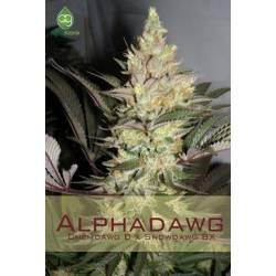 AlphadawgAlphakronik Seeds Regular
