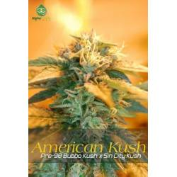 American KushAlphakronik Seeds Regular