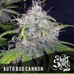 Bud Cannon Autofloreciente...
