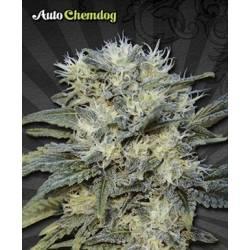 Chemdog Autofloreciente...