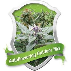 Autofloreciente Outdoor