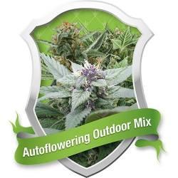Autofloreciente Outdoor Mix