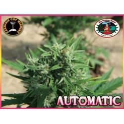 Automatic Autofloreciente...