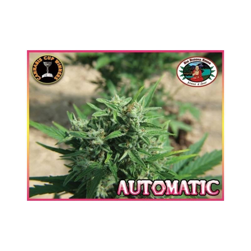 Automatic Autofloreciente Feminizada - 5 uds auto-fem