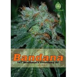 Bandana Regular