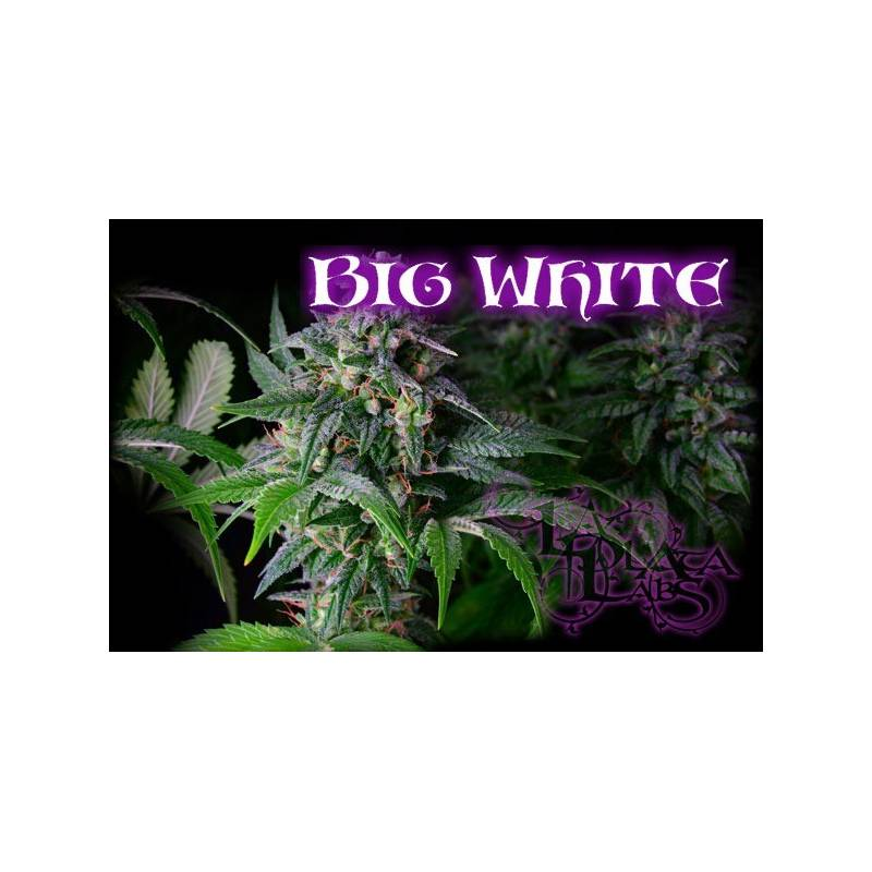 Big White Regular - 10 uds regu
