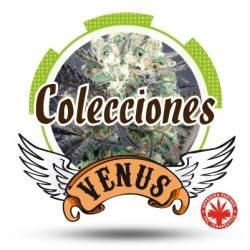 Colección Autofloreciente...