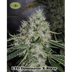 Dominator X Biker Ltd. Regular