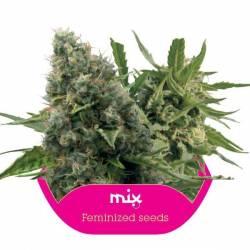 Feminized Mix