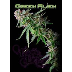 Green Alien Regular