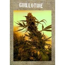 Guillotine Autofloreciente...