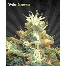 Polar Express...