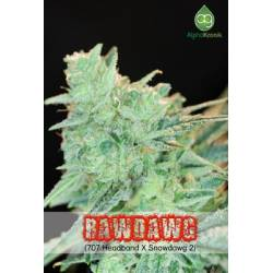 Rawdawg Regular