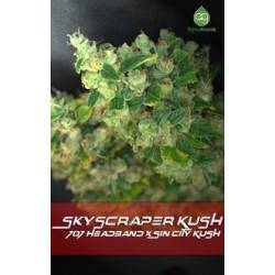 Skyscraper Kush Regular