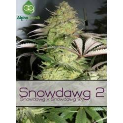 Snowdawg 2 Regular