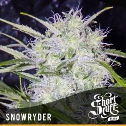 Snowryder Autofloreciente...