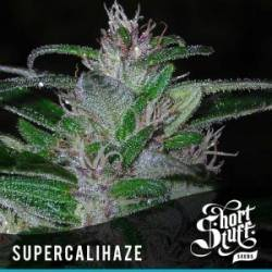 Super Cali Haze...