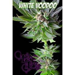 White Voodoo Regular