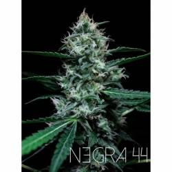 Negra 44 Feminizada