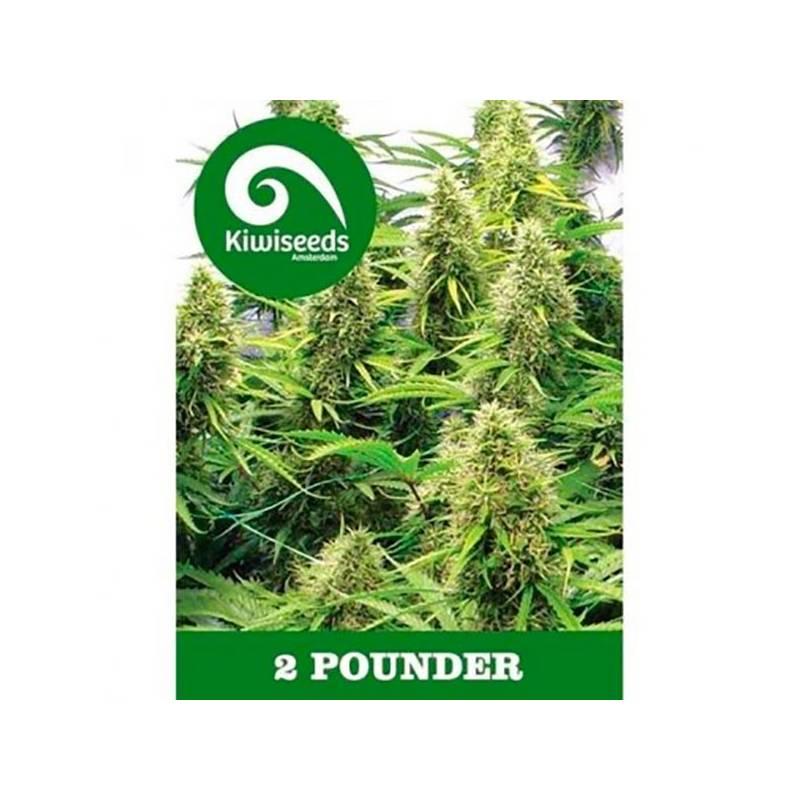2 Pounder Feminizada - 5 uds fem
