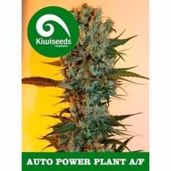 Power Plant Autofloreciente...