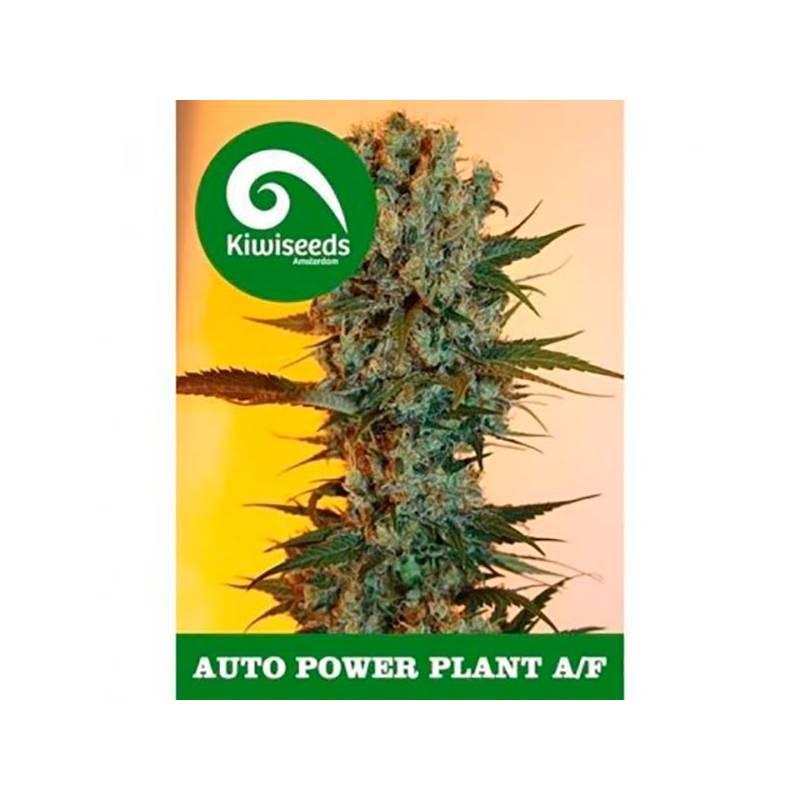 Power Plant Autofloreciente Feminizada - 3 uds auto-fem