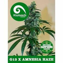 G13 X Amnesia Feminizada