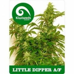 Little Dipper...