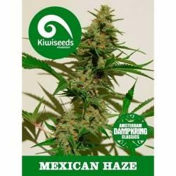 Mexican Haze Feminizada