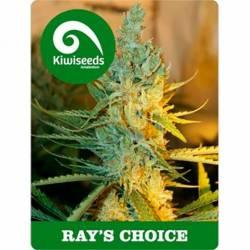Ray's Choice Feminizada