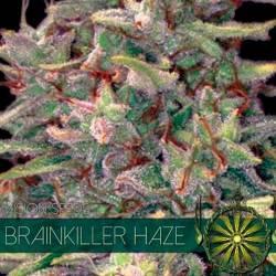 Brainkiller Haze Feminizada