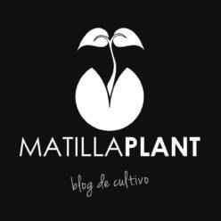 Blog cultivo marihuana
