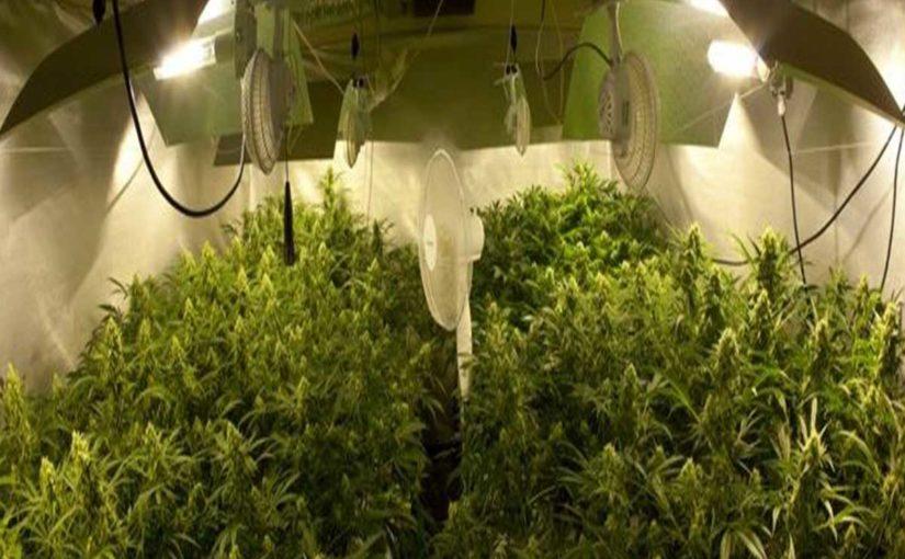 Importancia de la Ventilación en el Cultivo de Marihuana