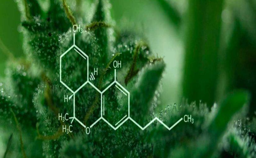 Potencial Terapéutico del THC