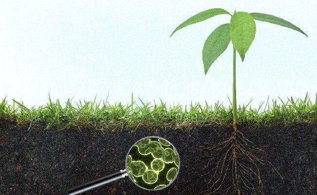 Cómo mejorar la vida microbiana del suelo
