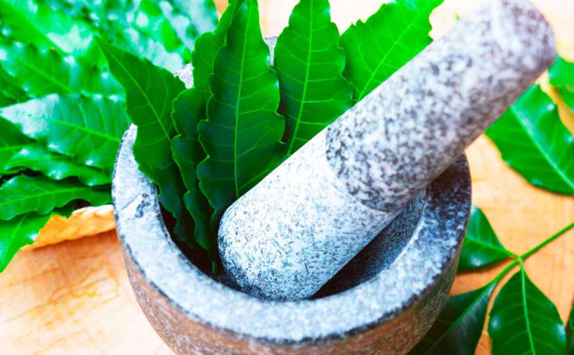 Torta de Neem, como usarla en tu cultivo de marihuana
