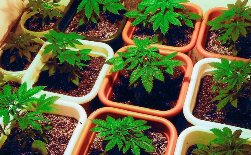 Diferentes macetas para el cultivo de cannabis