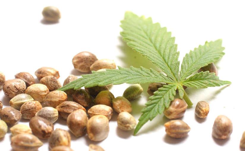 Mejores bancos de semillas de marihuana