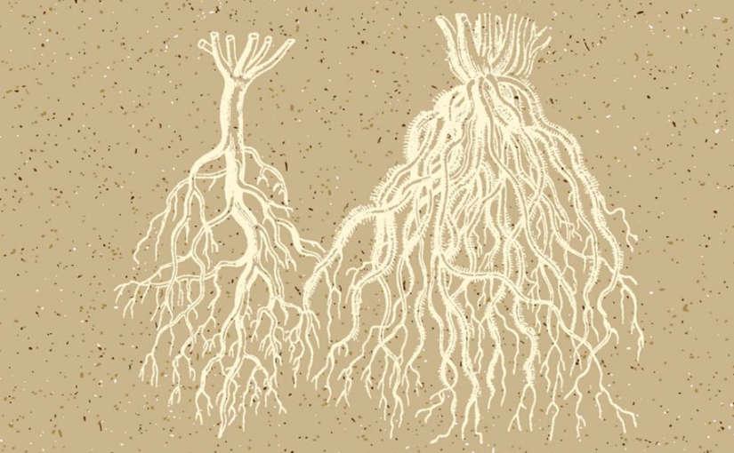 elaborar-un-estimulador-de-raíces-casero