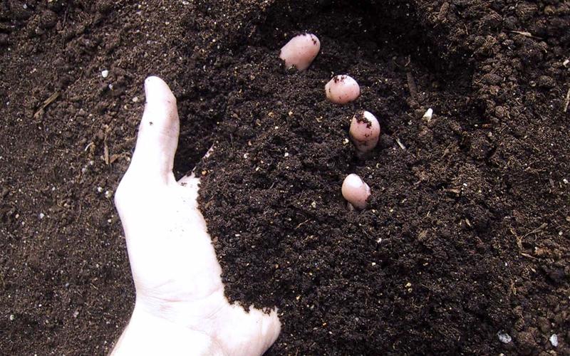 fabricar tu propio compost o sustrato casero