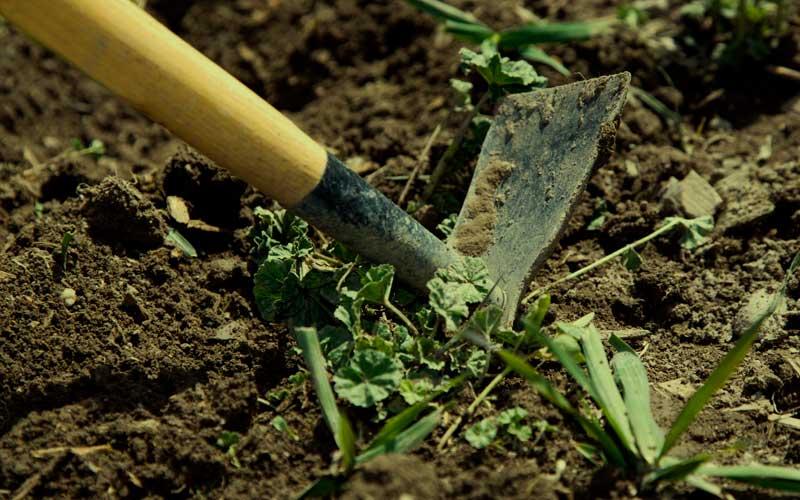 limpiar-tierra-cultivo