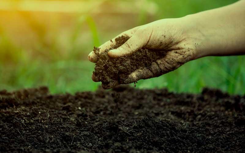 tierra-para-cultivo