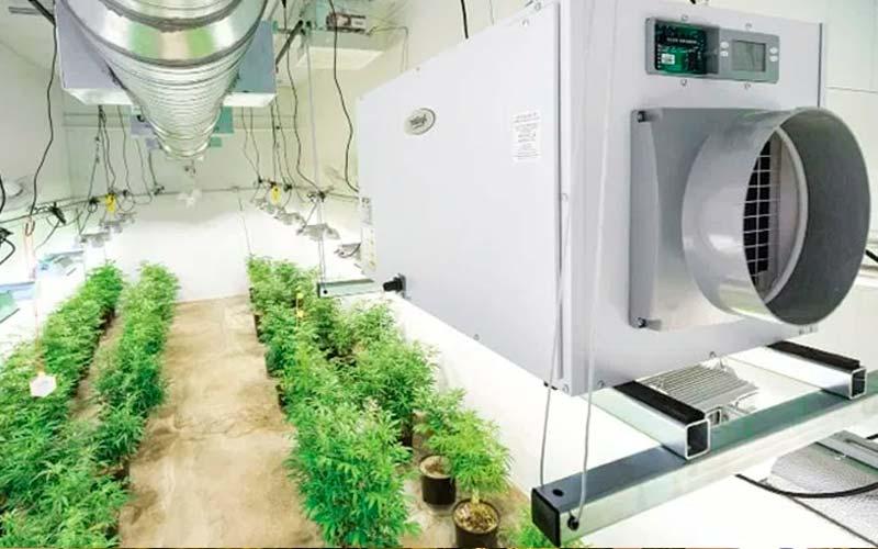niveles-humedad-cultivo-marihuana